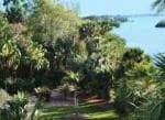 Marie Selby Botanical Gardens 4355a.jpg 1
