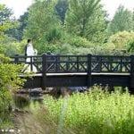 Barnes Wetland Centre 9.jpg 3