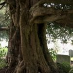 The Gwenfrewi Project wedding venue Conwy NORTH WALES outside tree