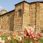 Colchester Castle Castle tulips 3