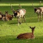 Whitworth Estate & Deer Park Whitworth Hall 9