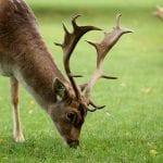 Whitworth Estate & Deer Park Whitworth Hall 10