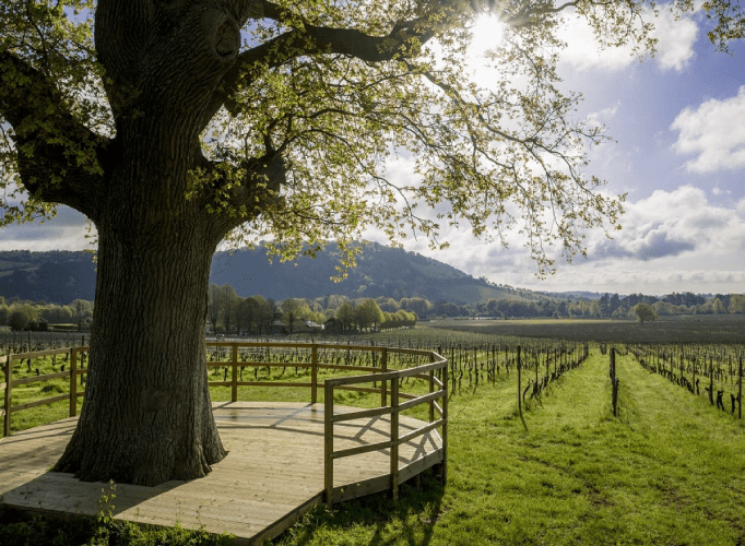 UK Countryside Wedding Venues For Your Big Day Background (25) 10